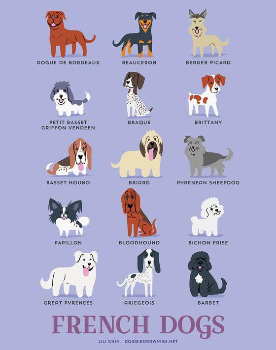Gambar Kartun Anjing Perancis Kembang Pete Animasi Keren