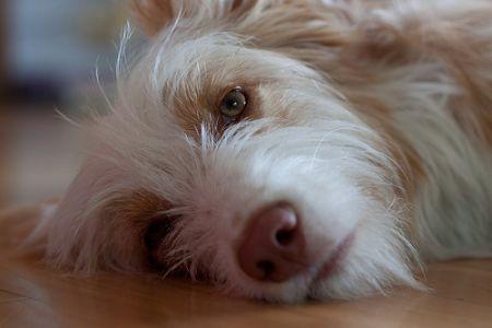 Anjing Tidur2