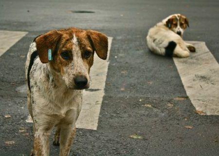 Anjing jalanan