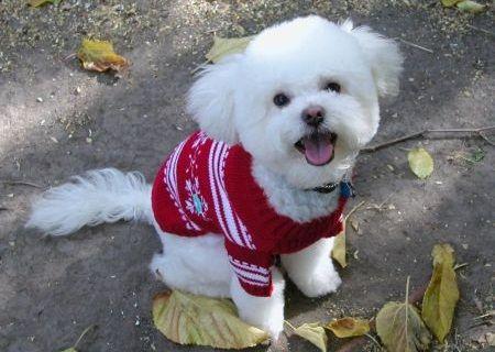 Anjing kecil