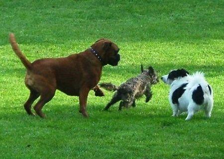 Anjing peliharaan