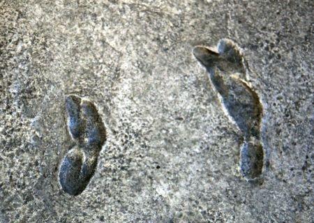 Fosil Manusia
