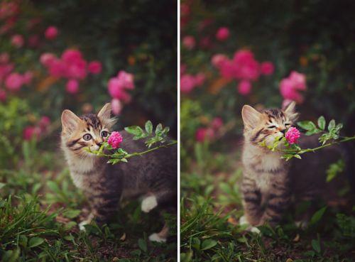 Binatang Mencium Bunga 1