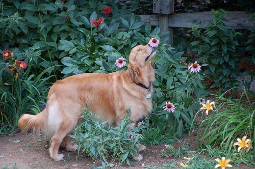 Binatang Mencium Bunga 10