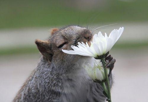 Binatang Mencium Bunga 3
