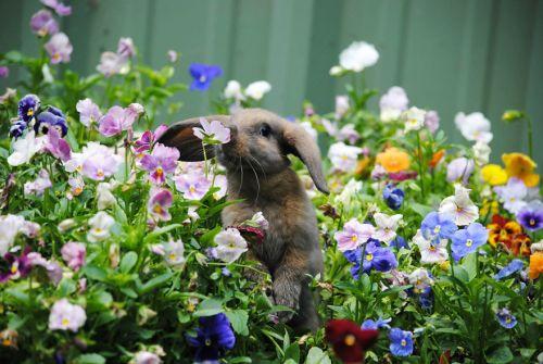Binatang Mencium Bunga 4