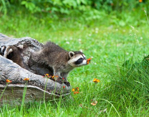 Binatang Mencium Bunga 5