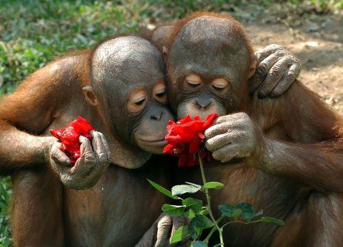 Binatang Mencium Bunga 6