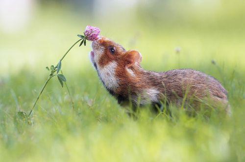 Binatang Mencium Bunga 7