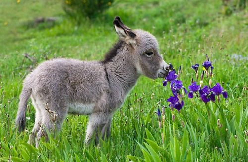 Binatang Mencium Bunga 8