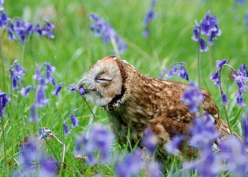Binatang Mencium Bunga 9