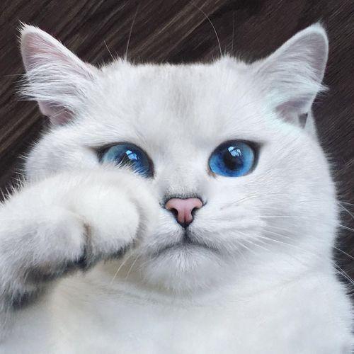 Coby Kucing Bermata Indah 1