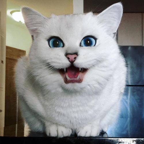 Coby Kucing Bermata Indah 10