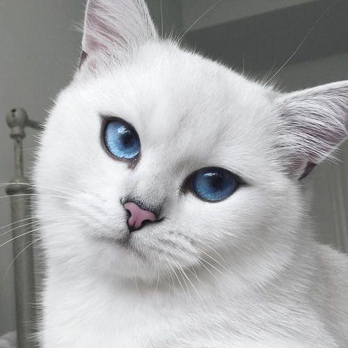 Coby Kucing Bermata Indah 3