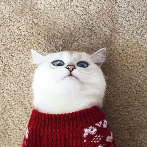 Coby Kucing Bermata Indah 5