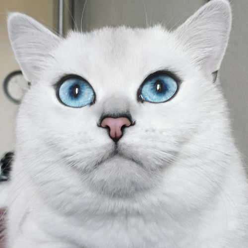 Coby Kucing Bermata Indah 6