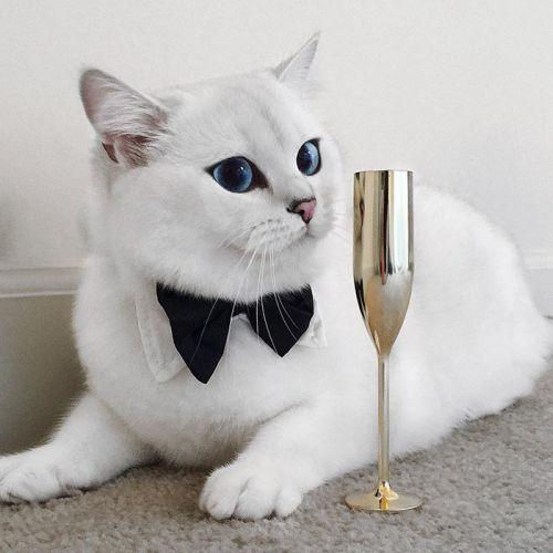 Coby Kucing Bermata Indah 7
