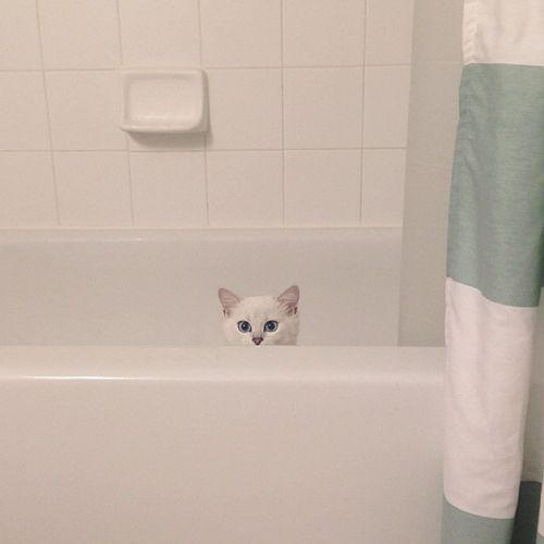 Coby Kucing Bermata Indah 8