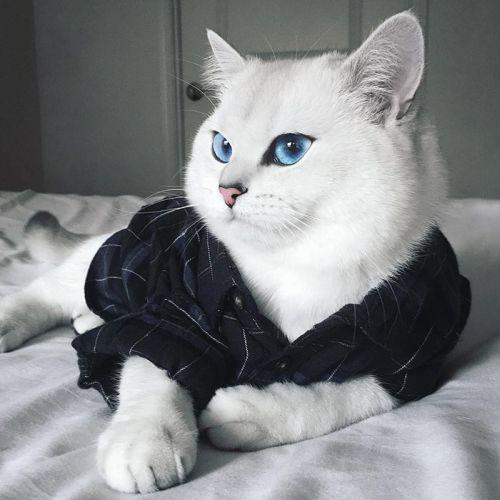 Coby Kucing Bermata Indah 9