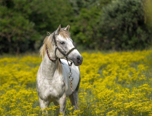 gambar kuda arsiran