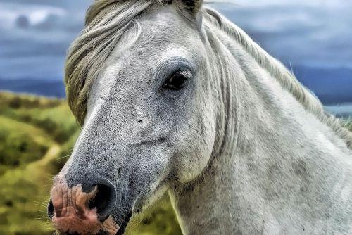 gambar kuda anak