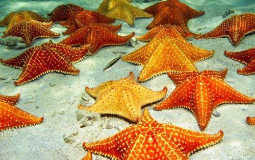 anatomi bintang laut