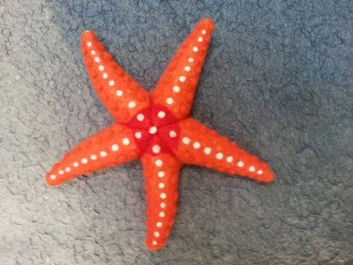 bintang laut dan bagiannya