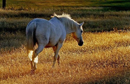gambar kuda besi