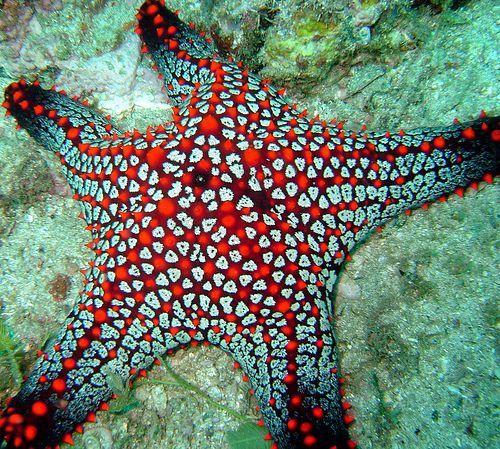 foto bintang laut yang cantik