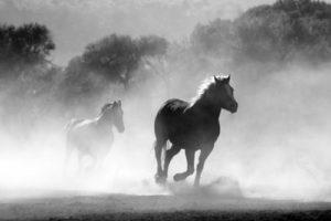 gambar kuda kartun