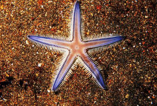 gambar bintang di laut