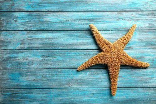 gambar bintang laut untuk diwarnai