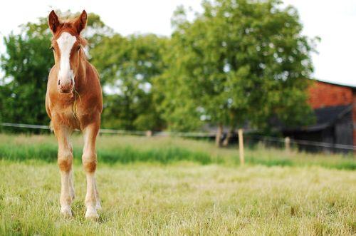 gambar kuda dan keledai yang sarat dengan beban