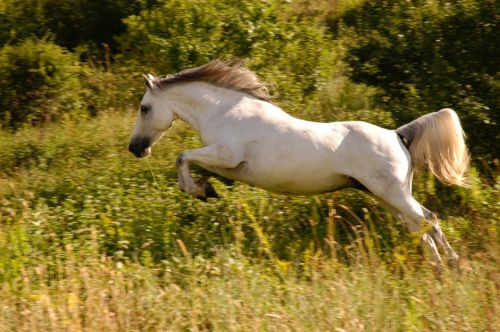 gambar kuda delman
