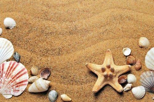 gambar hewan bintang laut