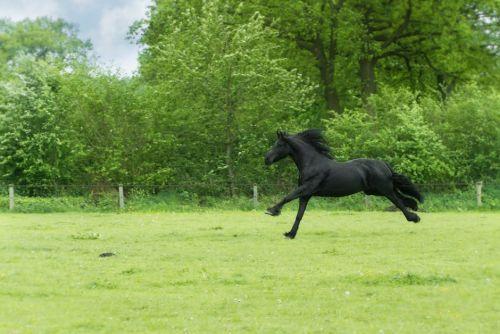 gambar kuda duduk