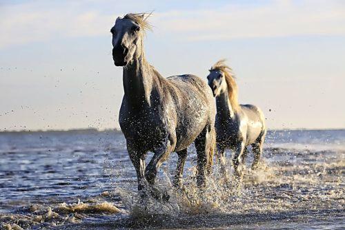 gambar kuda dengan beban