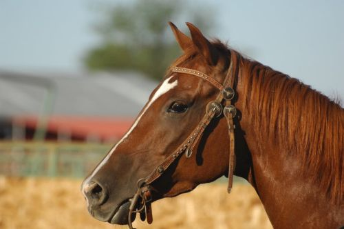 gambar kuda di buku gambar