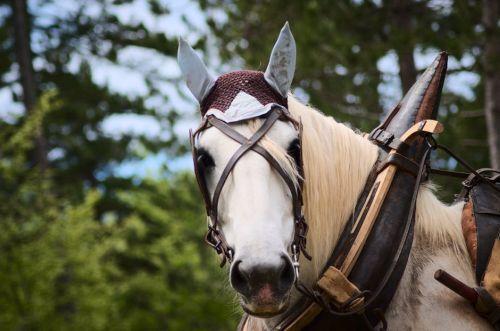 gambar ekor kuda poni