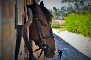 gambar endang kuda lumping