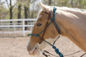 gambar kuda ferrari