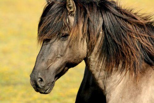gambar kuda fengshui