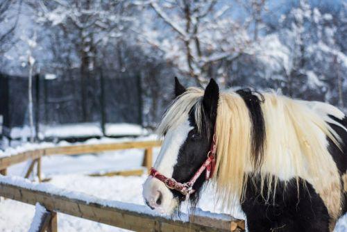 gambar film kuda poni