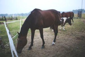 gambar fauna kuda