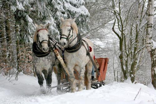 gambar kuda anak tk