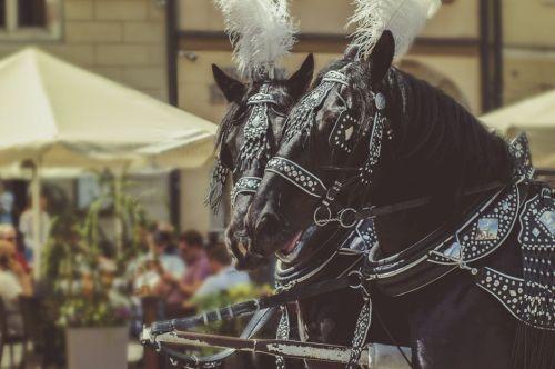 gambar film kuda