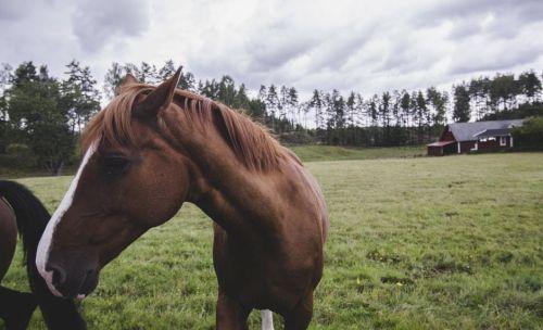 gambar kuda gagah
