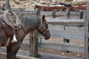gambar kuda gendong keledai