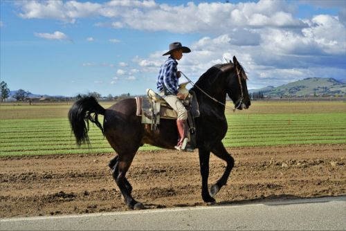 gambar kuda gepang