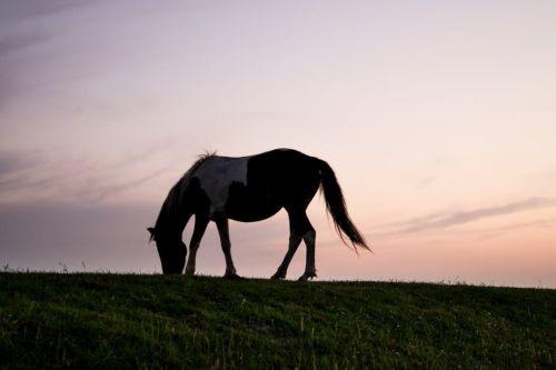gambar kuda gambar kuda